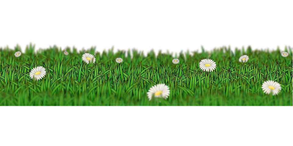 Meadow, Grass, Green, Flower, Daisy, White, Spring