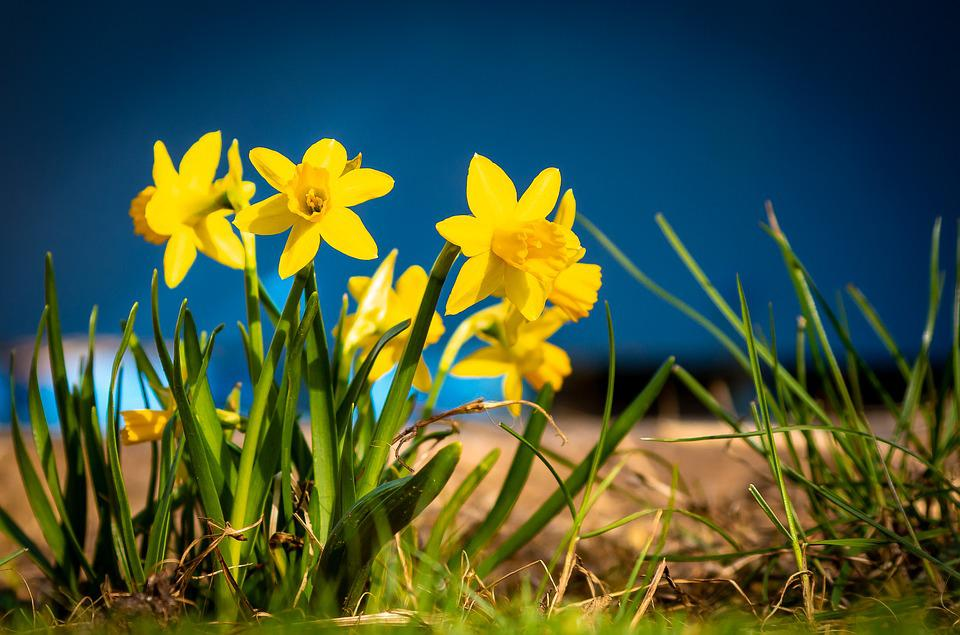 Nature, Flower, Plant, Grass, Meadow