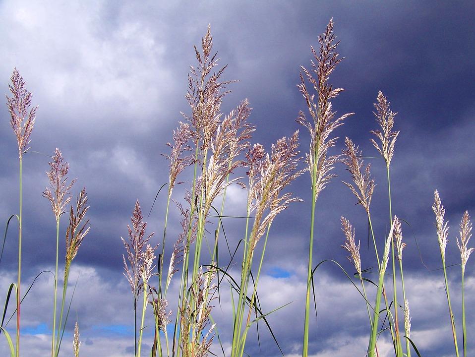 Grass, Tall, Clouds, Sky, Landscape, Meadow, Park