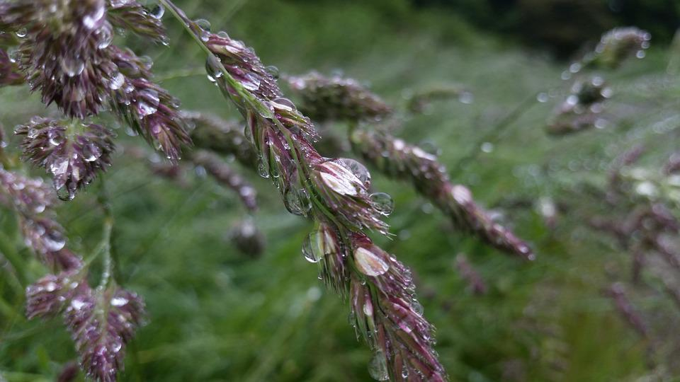 Morning, Dew, Drop, Nature, Grass, Forest, Dewdrop