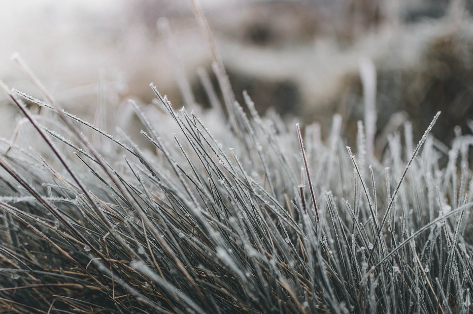 Grass, Frost, Winter, Frozen, Morning, Winter Mood