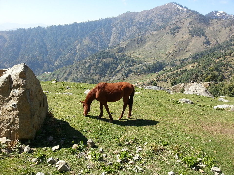 Horse, Rock, Grass, Mountain, Grazing, Landscape