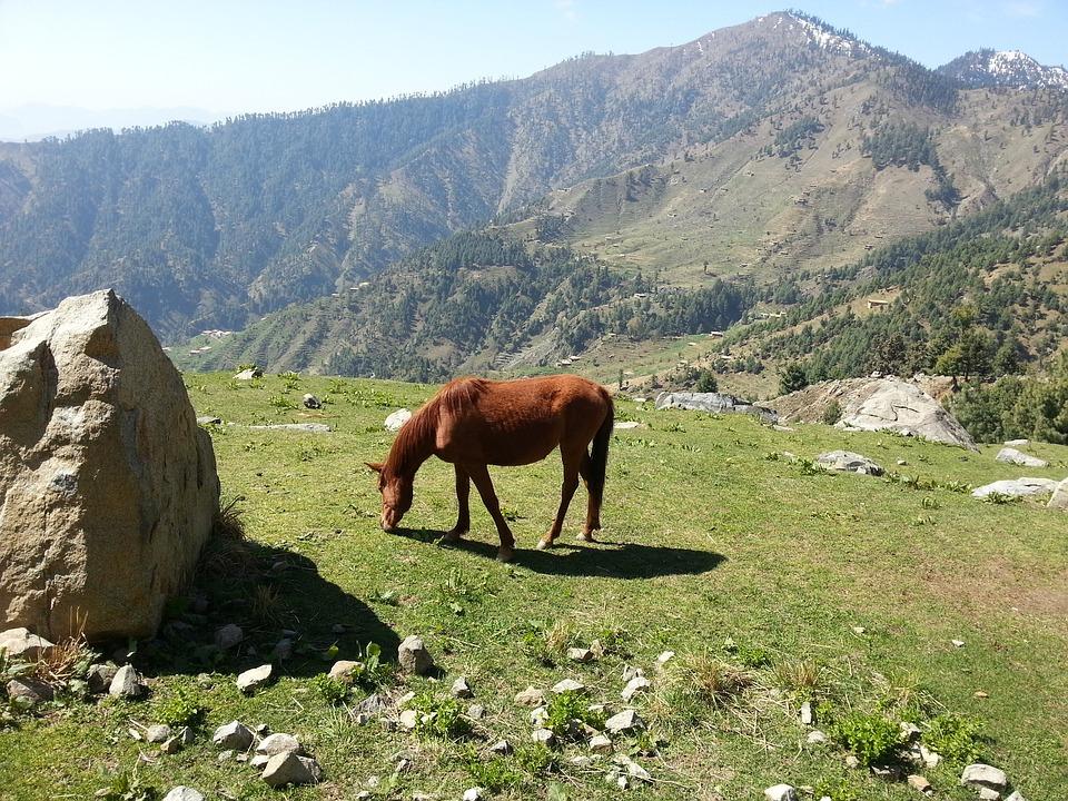 Horse, Rock, Grass, Mountain, Grazing, Landscape