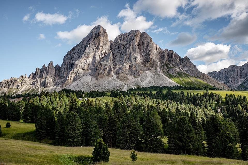 Alpine, Forest, Mountains, Daylight, Evergreen, Grass