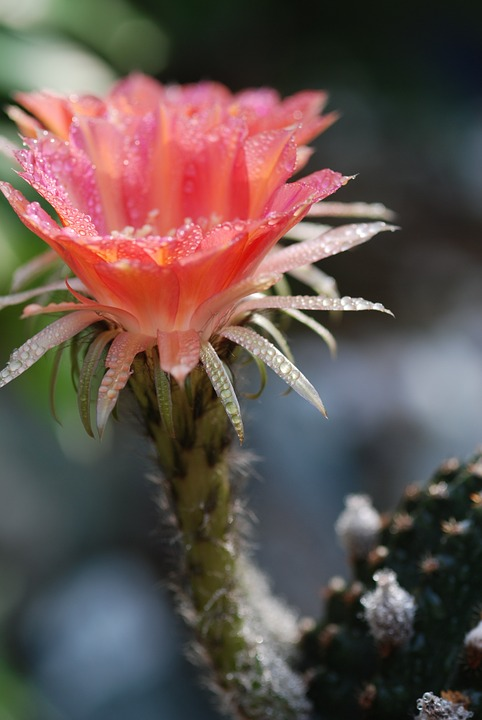 Flowers, Cactus, Spring, Natural, Crystal Clear, Grass