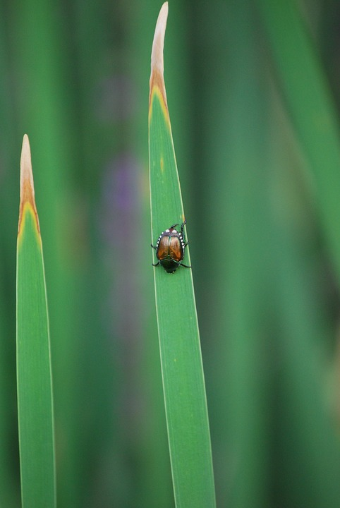 Beetle, Grass, Blade Of Grass, Nature, Insect, Summer