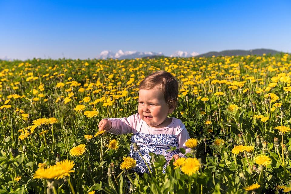 Flower, Nature, Field, Hayfield, Dandelion, Baby, Grass