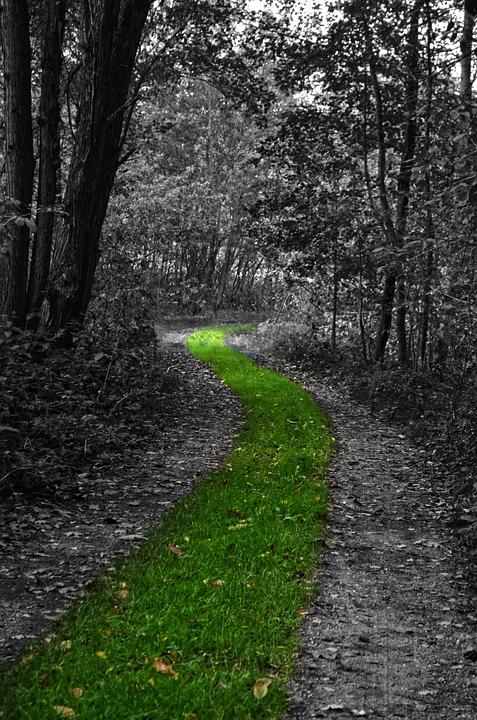 Nature, Forest, Trees, Path, Grass, Green