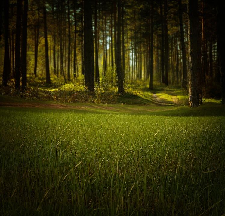 Forest, Nature, Trees, Grass, Green, Summer