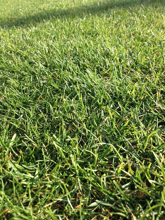 Grass, Field, Green, Nature, Lawn, Garden, Spring