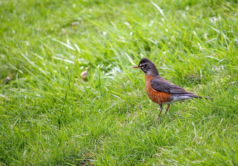 Nature, Grass, Bird, Wildlife, Outdoors