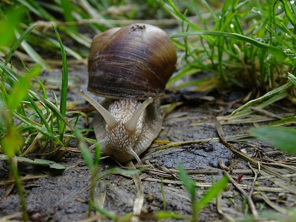 Worm, Conch, Macro, Nature, Slowly, Grass, Snail Shell