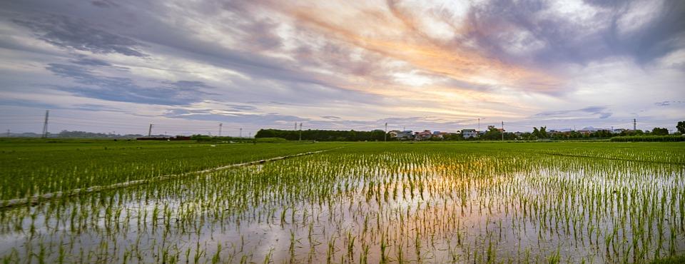 Green, Field, Landscape, Nature, Grass, Sky, Summer
