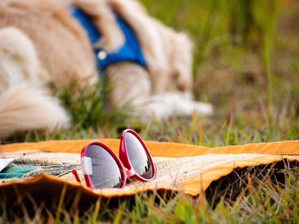 Glasses, Grass, Carpet, Nature, Outdoor, Dog, Animal