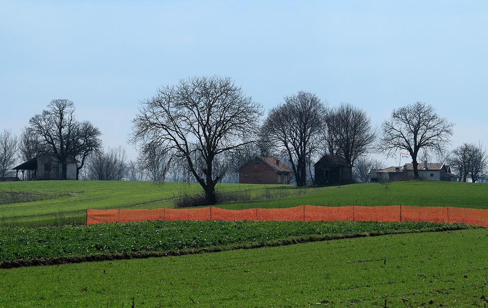 Early Spring, Panoramic, Field, Grass, Tree, Nature