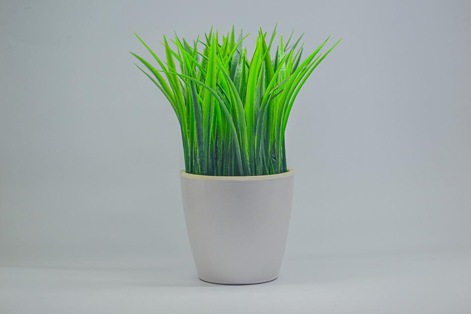 Grass, House Plant, Home Decor, Potted Plant