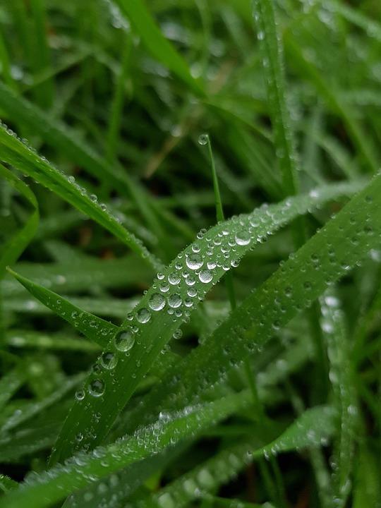 Dew, Drop, Leaf, Flora, Nature, Rain, Grass, Growth