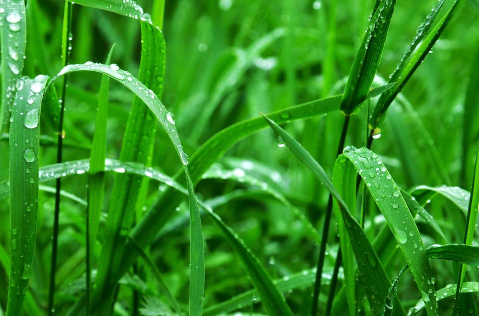 Grass, Wet, Green, Rain, Rain Drops, Nature, Summer