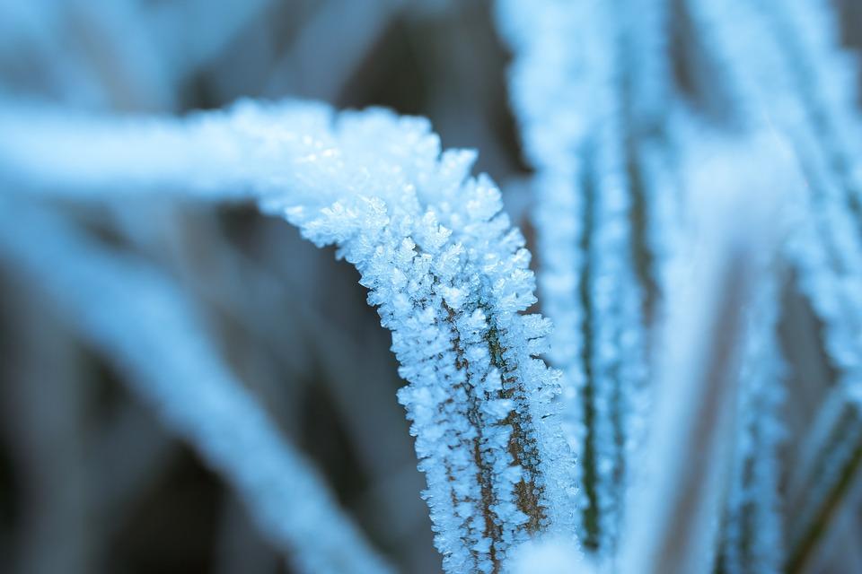Ice, Eiskristalle, Frost, Winter, Grass, Reed, Frozen