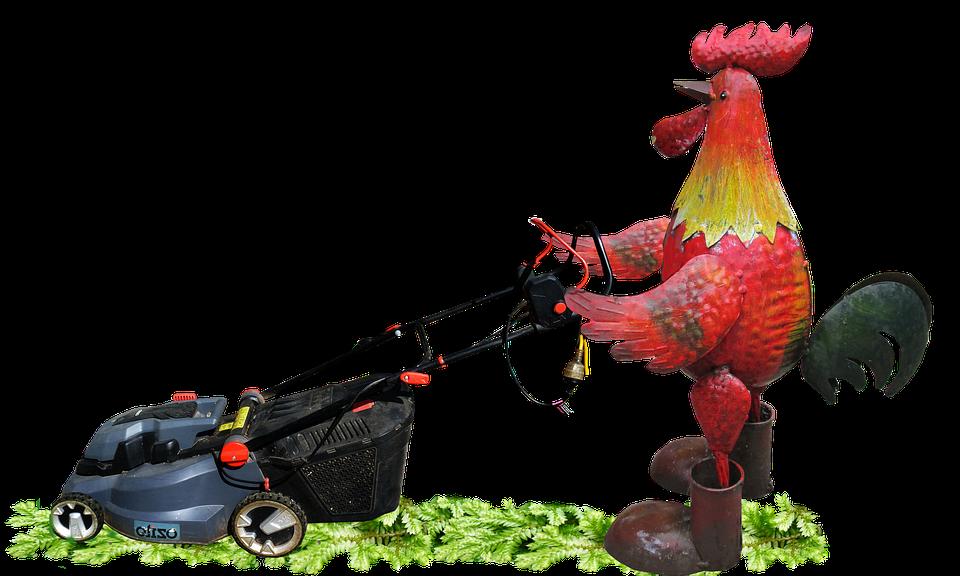 Rooster, Mowing, Grass, Garden