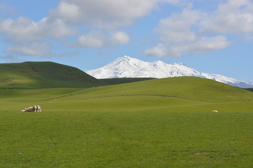 Grass, Sheep, Rural, Landscape, Animals, Meadow