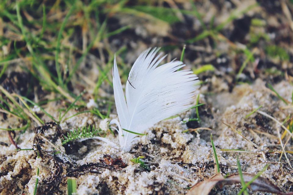 Spring, Ground, Grass, Sand, Airy, Bird Feather