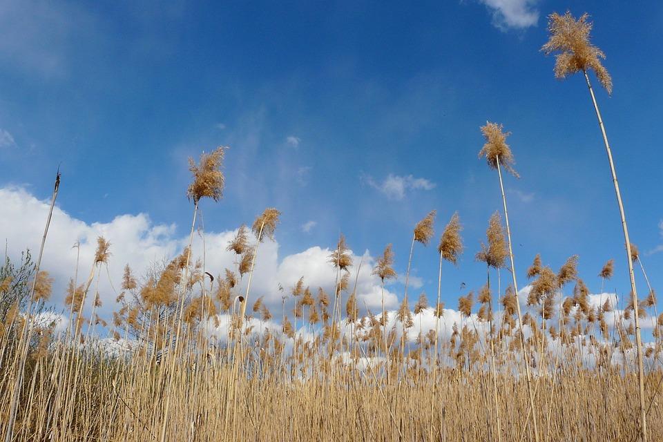 Field, Nature, Grass, Plant, Shoots