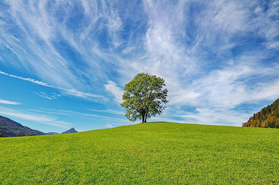 Tree, Sky, Nature, Clouds, Landscape, Grass
