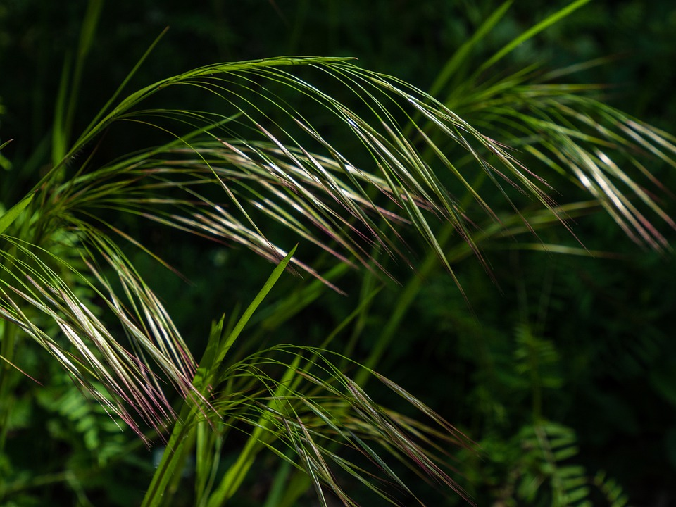 Grass, Arch, Fine, Nature, Flora, Spiked, Shine, Mood