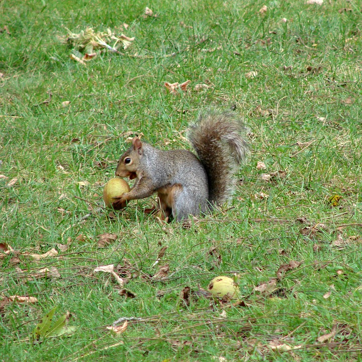 Squirrel, Eating, Fruits, Green, Grass, Weeds