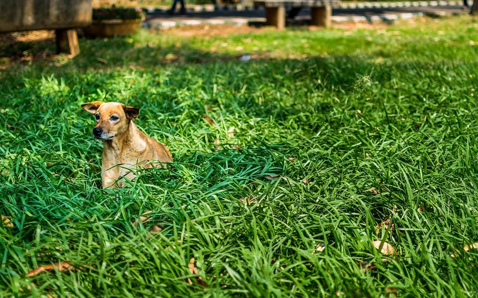 Dog, Alone, Green, Grass, Lawn, Spring, Stray Dog