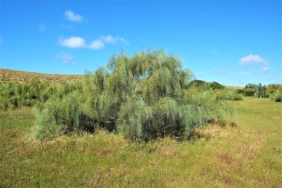 Nature, Grass, Landscape, Tree, Summer, Algarve