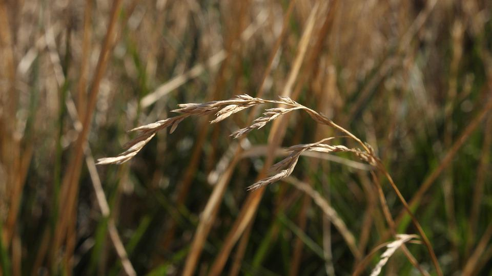 Nature, Grass, Summer, Environment, Outdoor, Plant