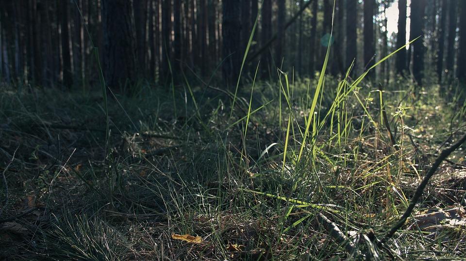 Forest, Grass, Sunrise
