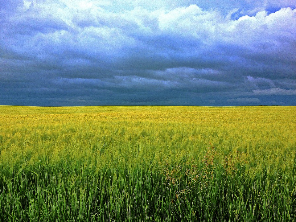 Barley, Grass, Clouds, Field, Sunshine, Grain, Sky