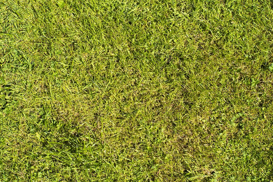 Rush, Texture, Green, Grass, Meadow, Structure