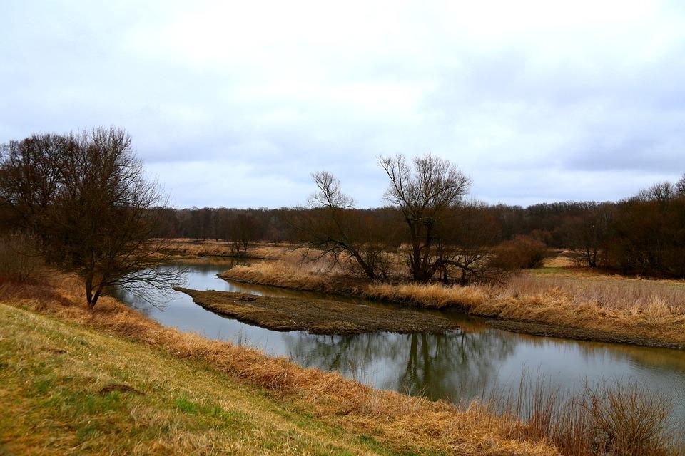 The River Odra, Tree, Grass, Landscape, Green, Nature
