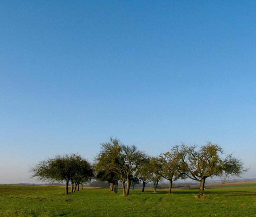 Orchard, Blue Sky, Tree, Grass, Landscape, Nature, Sky