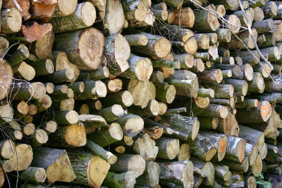 Wood, Forest, Wood Pile, Green, Grass, Nature, Tree