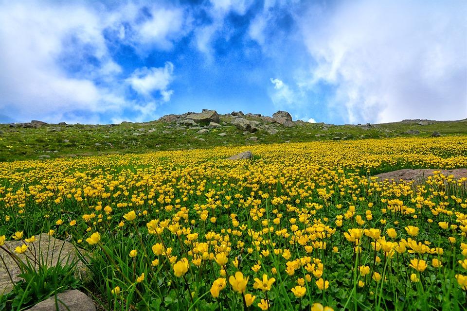 Nature, Area, Landscape, Flower, Chan, Grass, Turkey