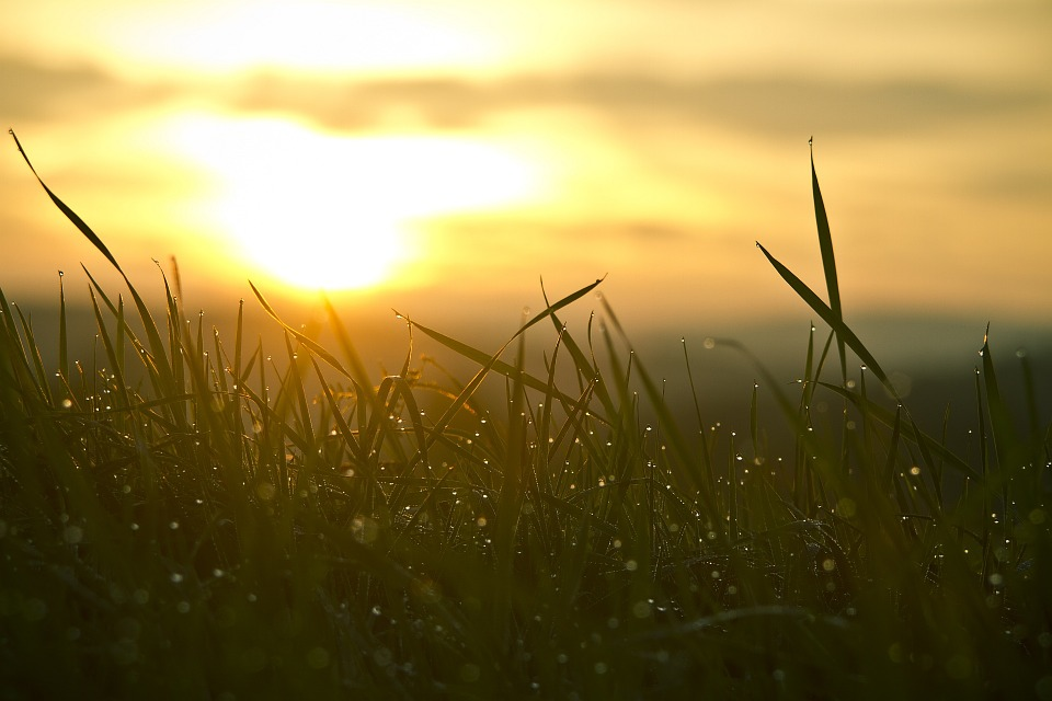 Grass, Sunrise, Water Tropics, Sun, Sky, Nature, Mood