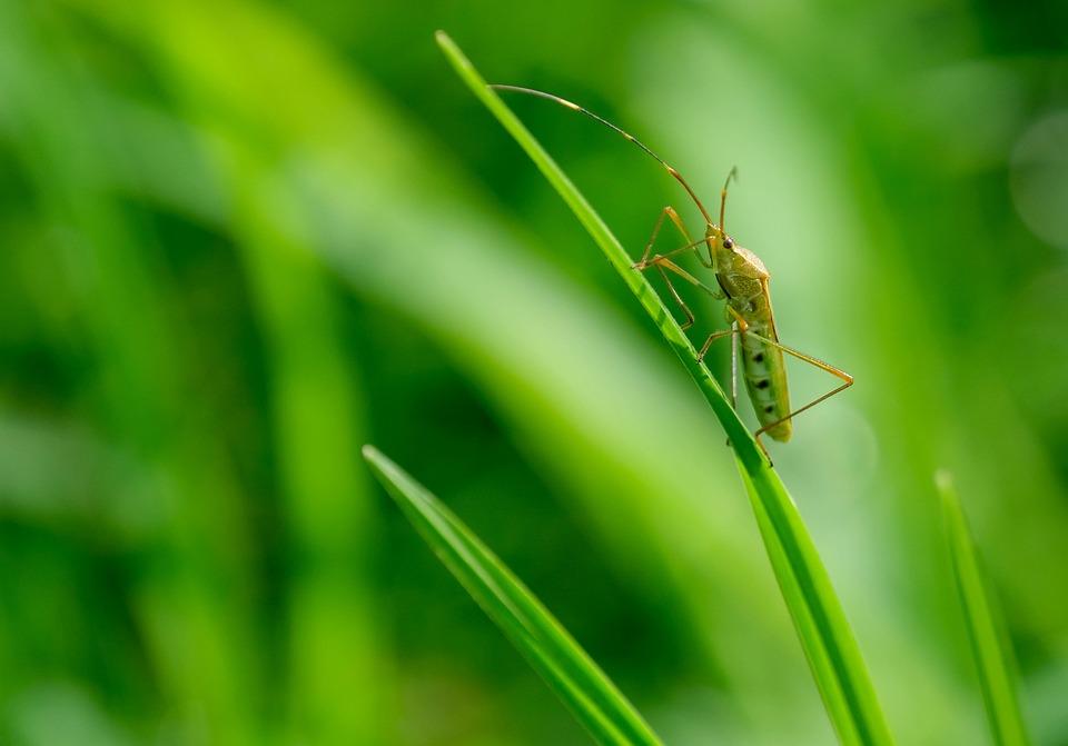 Grasshopper, Insect, Grass, Wildlife, Fauna, Nature