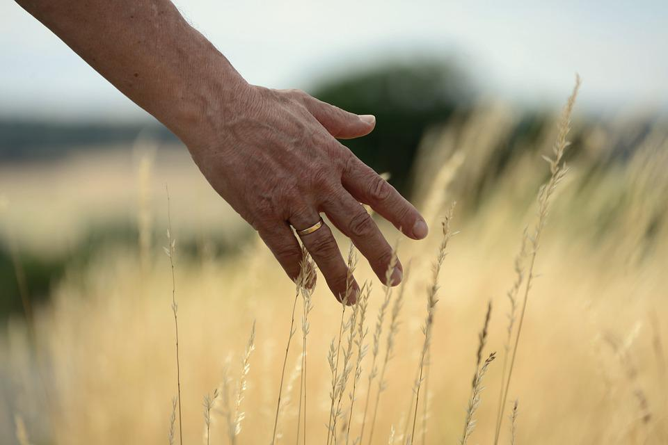 Hand, Grasses, Feel, Summer, Field, Touch, Nature