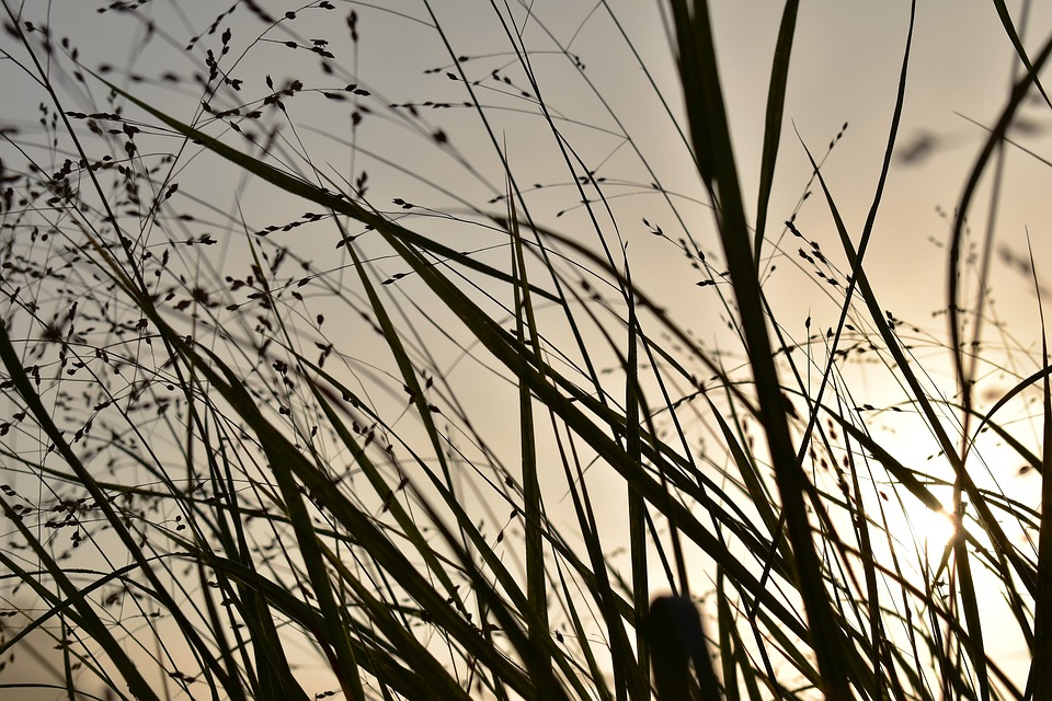 Grass, Grasses, Nature, Back Light, Sunrise, Landscape