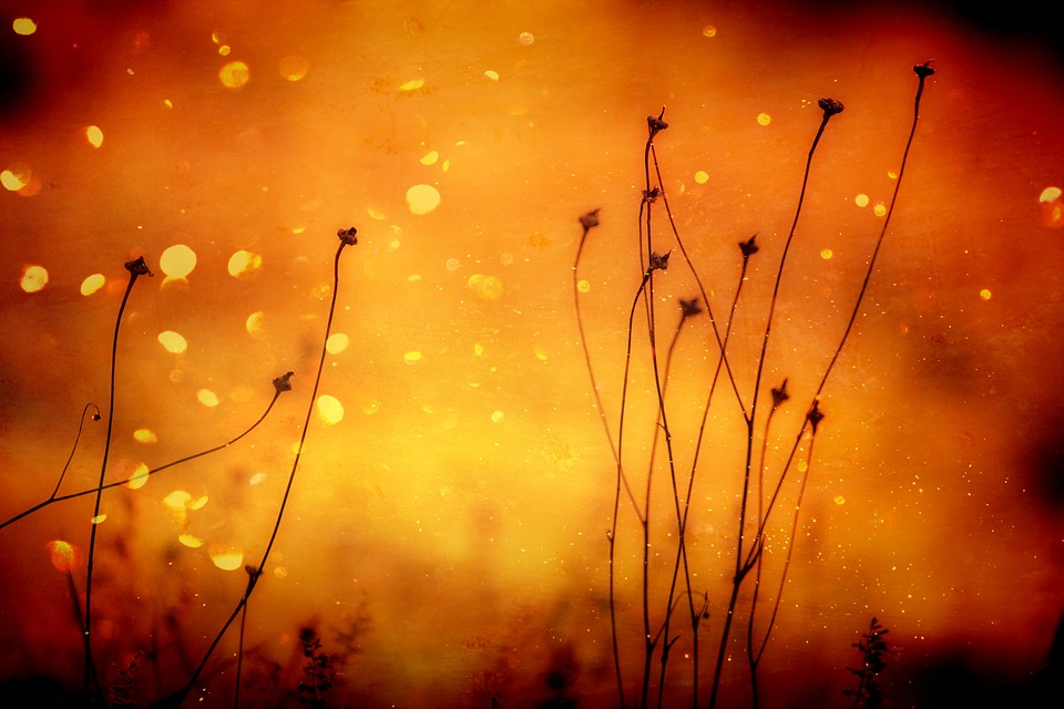 Plant, Grasses, Orange, Abstract, Bright, Seeds