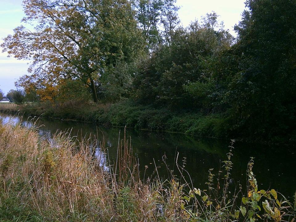 River, Bank, Waters, Water, Savage, Grasses, Shrubs