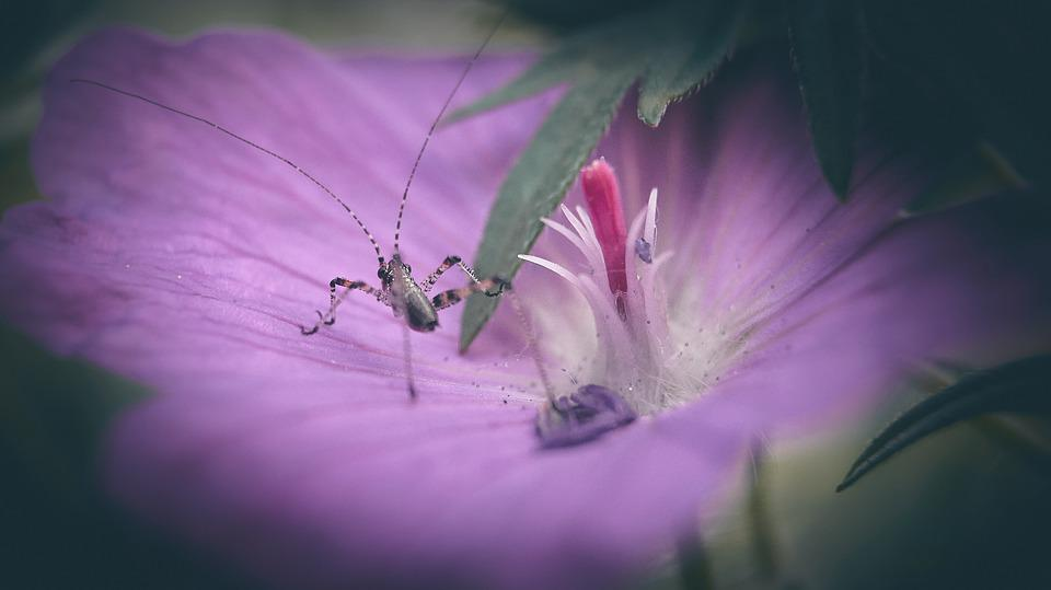 Grasshopper, Flower, Nature, Insect, Plants, Insects