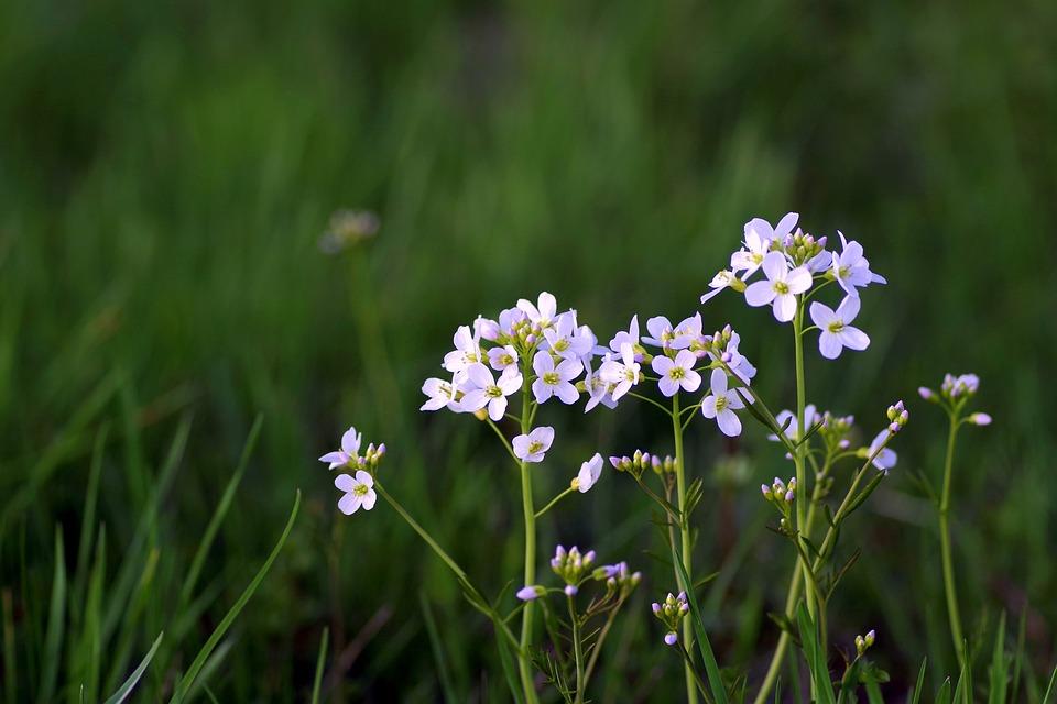 Free photo Grasshopper Tiny White Flower Spring Warzucha - Max Pixel