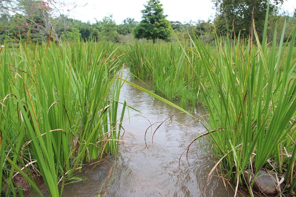 Grassland, Streams, Creek