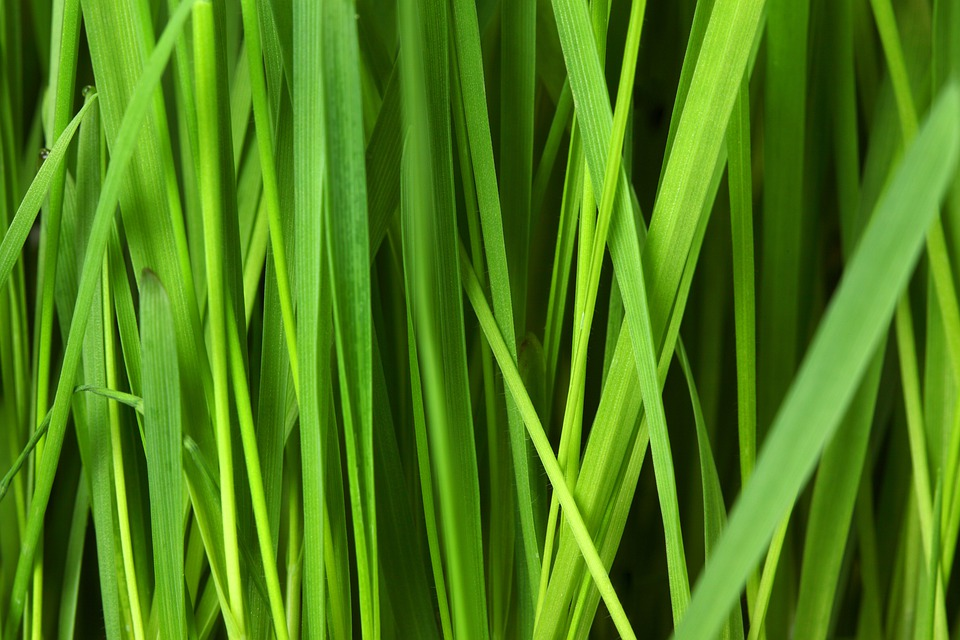 Abstract, Background, Floral, Grass, Grassy, Green